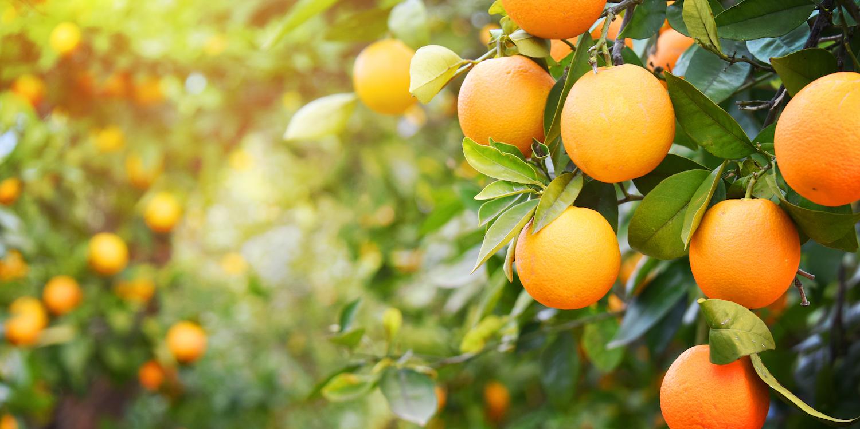 Propiedades nutricionales de la Naranja