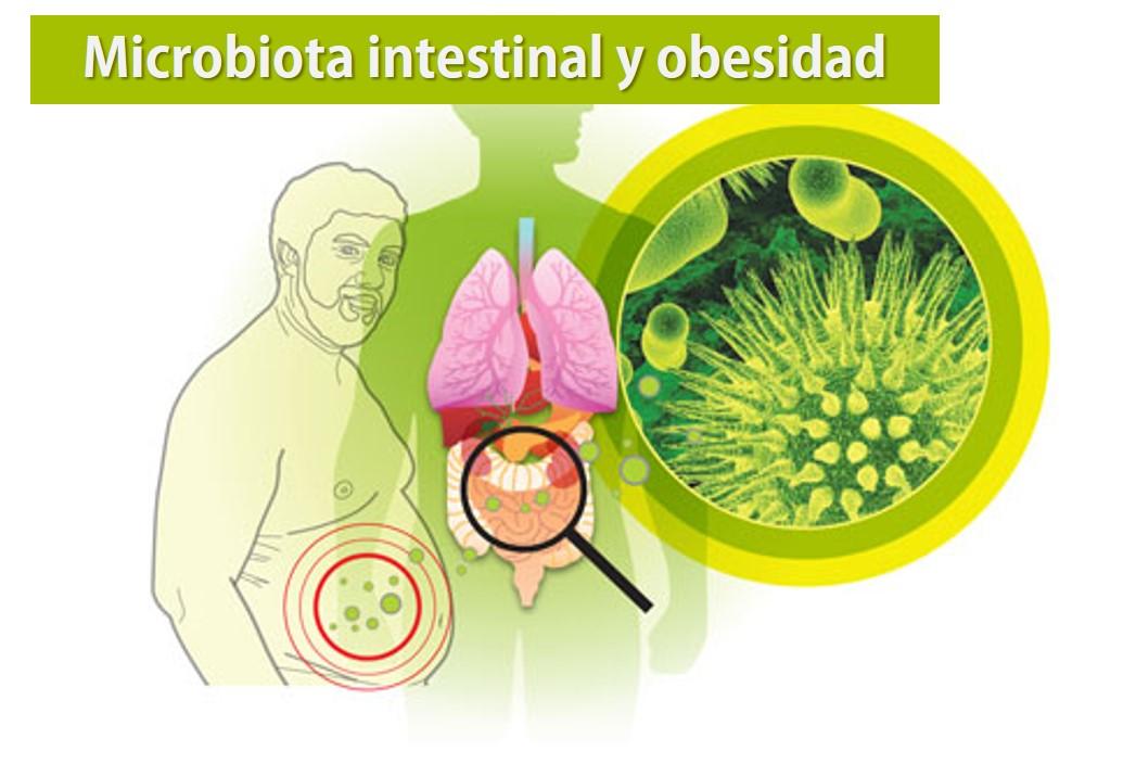 La MICROBIOTA INTESTINAL, un nuevo factor para prevenir la Obesidad y la Diabetes